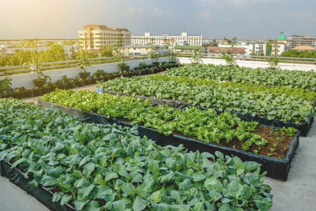 How can urban agriculture influence the future of your building projects?